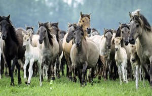 animal-wallpapers-with-a-group-of-horses-hd-horses-wallpaper