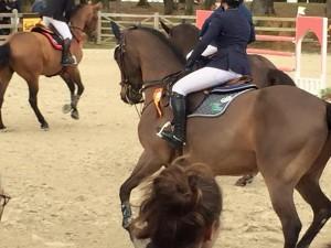 Dlite saddle cloth 2016